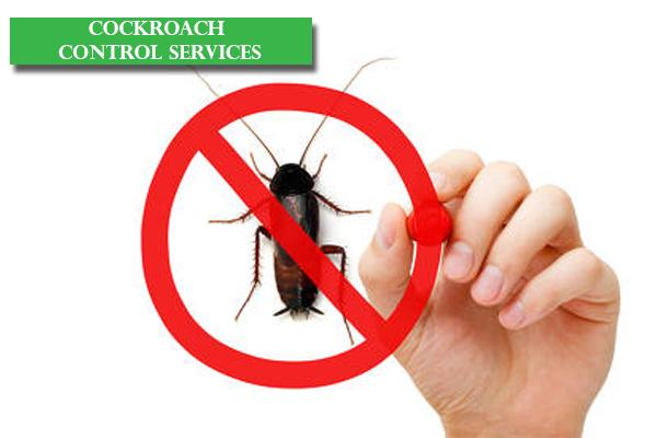 Best Cockroach Control Services in Bangalore, Reliable Cockroach Control