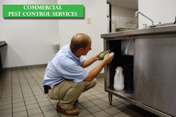 Best Commercial Pest Control Service in Bangalore, Reliable Commercial Pest Control