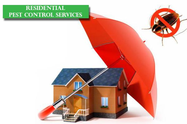 Best Residential Pest Control Service in Bangalore, Reliable Residential Pest Control