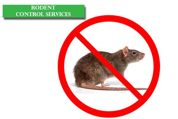 Best Rodent Control Services in Bangalore, Reliable Rats and Rodent Control