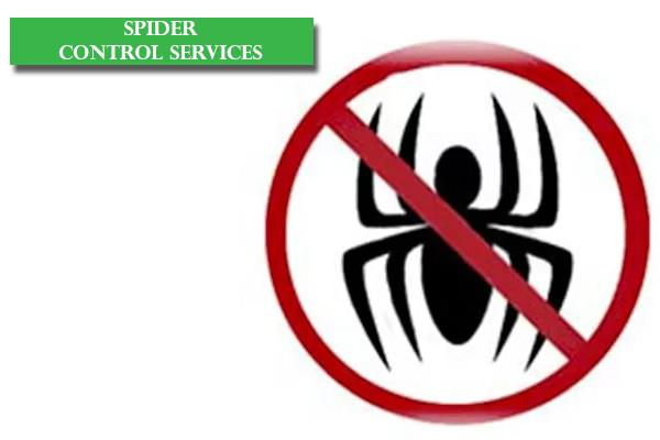 Best Spider Control Services in Bangalore, Reliable Spider Control